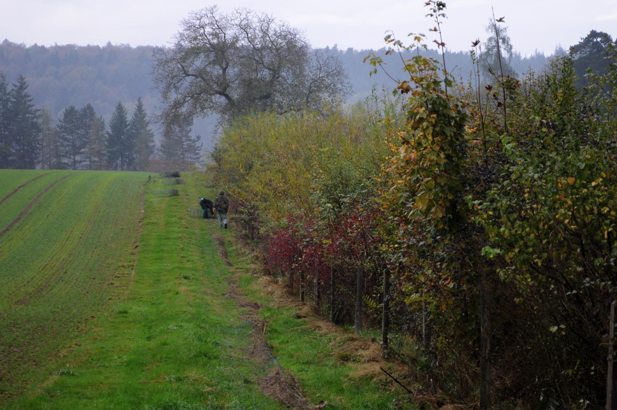 Hecke Sichtern Natur Und Vogelschutz Liestal